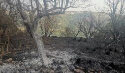 Incendi, i sindaci dell'Unione Valle degli Iblei a difesa dell'ambiente