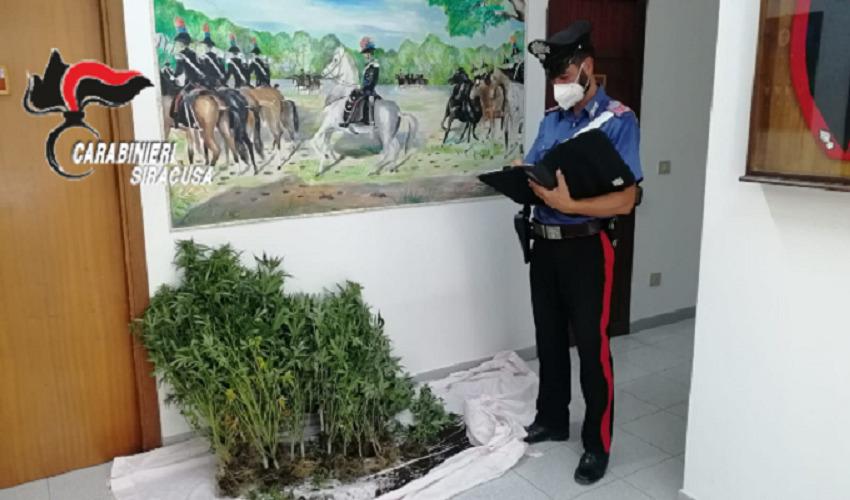 Coltiva cannabis nella sua casa di Sortino: arrestato 49enne
