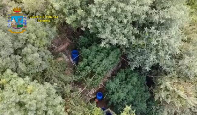Nel Palermitano, scoperta piantagione di canapa indiana: denunciato 42enne