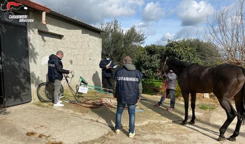 Corsa clandestina di cavalli sulla Maremonti: 4 denunciati. Sequestrati un cavallo e un calesse