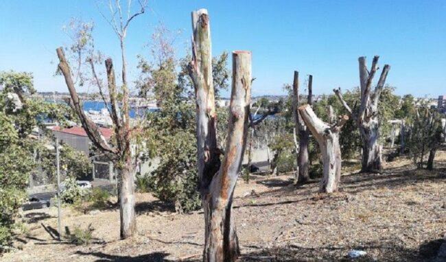 Esposto in Procura per la potatura di centinaia di alberi ad Augusta
