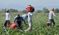 Lavoratori agricoli, firmato il rinnovo del contratto provinciale