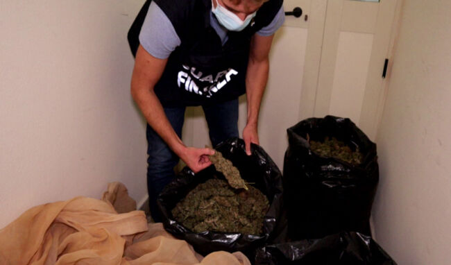 Coltivazione di marijuana a Gela, sequestrate 1.000 piante e 40 kg. Un arresto