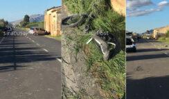 Incidente mortale a Santa Teresa Longarini: ad avere la peggio un ciclista