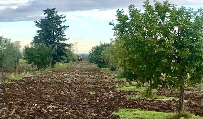 Mille e 200 alberi di Paulownia piantumati nell'area Pip a Priolo