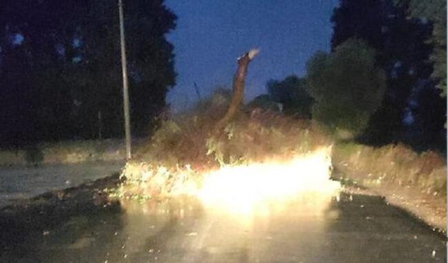 Pioggia battente e vento forte, albero si abbatte al suolo sulla strada dell'Arenella
