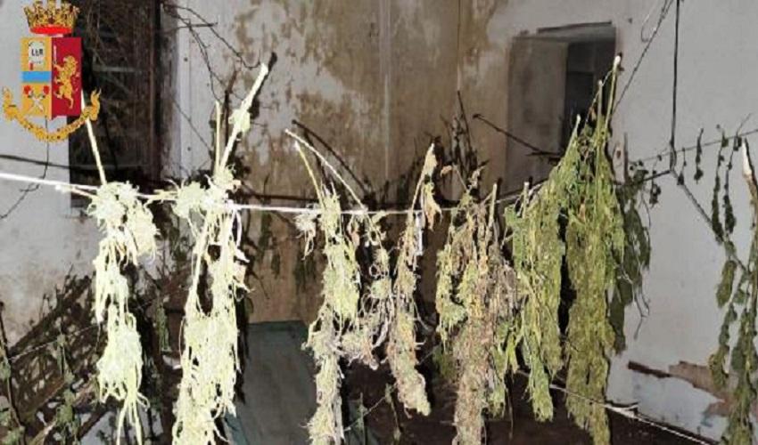 Coltivazione di marijuana, arrestato 15enne a Lentini